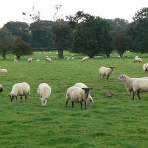 Sheep Incinerator | Burn-Rite